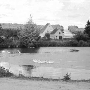 Dorfweiher in Poppendorf